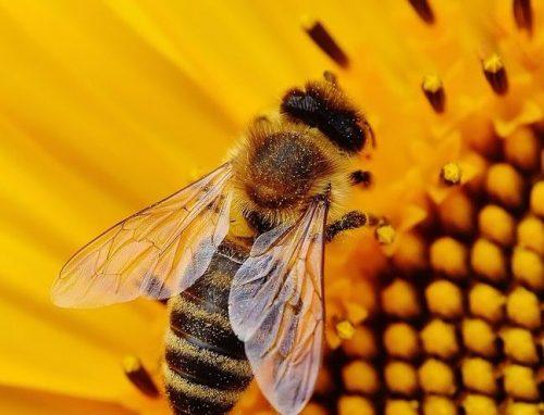 sour honey; honey; stingless bees; anti-cancer properties; cancer
